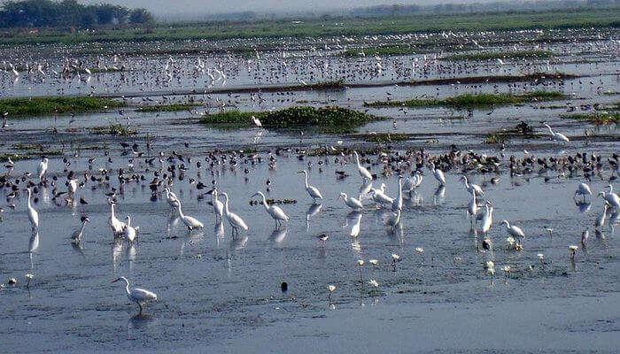 Kolleru Lake Bird Sanctuary