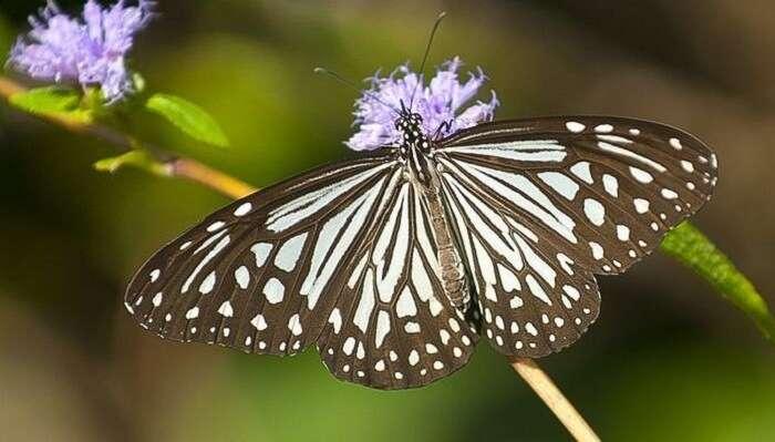 Mhadei Wildlife Sanctuary Offbeat Places In Goa