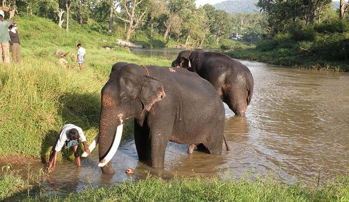 Wildlife Sanctuary in Ooty