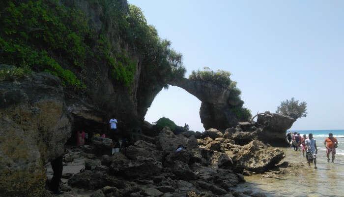 coral bridge