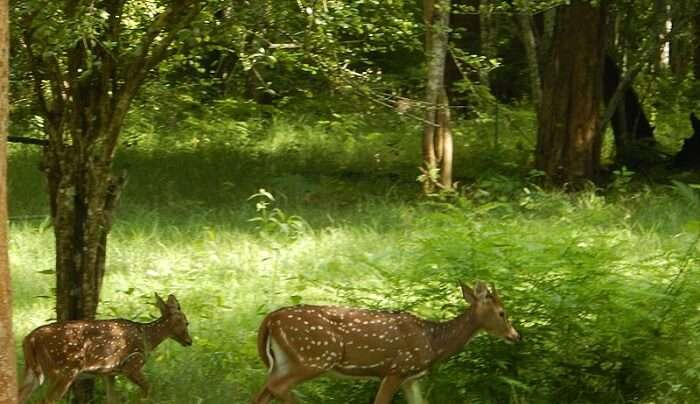 watch the wildlife experience in the park