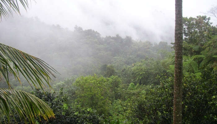 Rainforest is the only tropical rainforest
