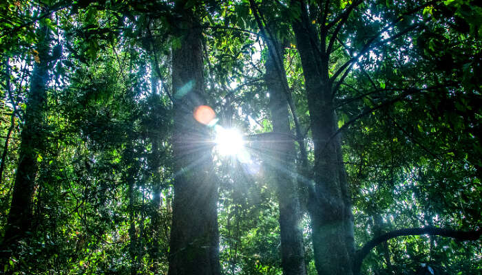 Woods in the Pushpagiri Wildlife Sanctuary, Coorg