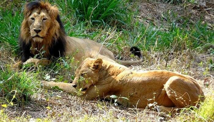 annerghatta National Park Safari