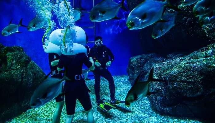 Scuba Diving In Bangkok Cover Image