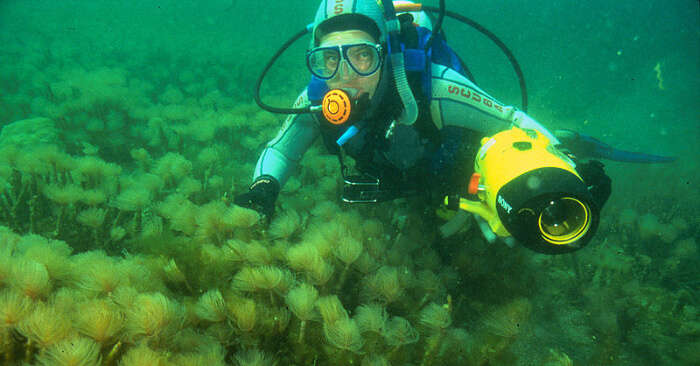 Scuba Diving In Tasmania For A Fulfilling Water Adventure