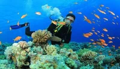 Spots For Scuba Diving