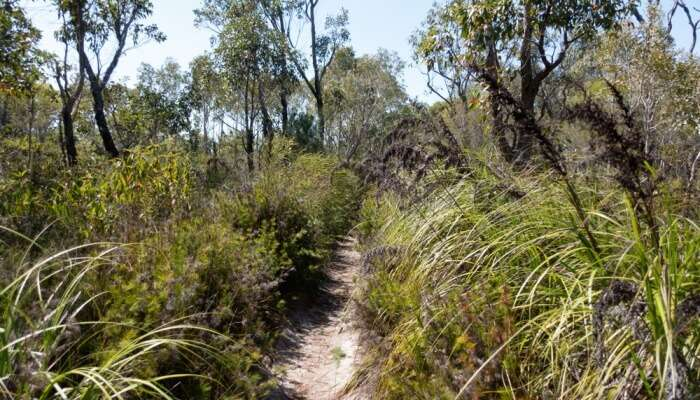 The Cooloola Great Walk