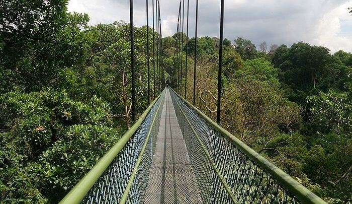 scenic views of the rainforests