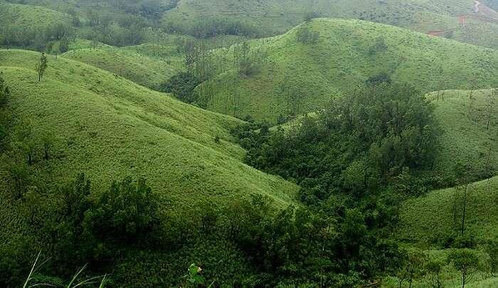 tea plantations everywhere