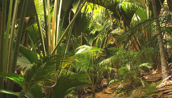 a must-visit spot of Seychelles