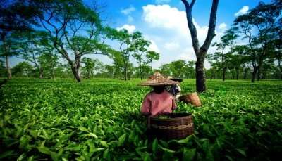 Best PLACES TO VISIT IN ASSAM