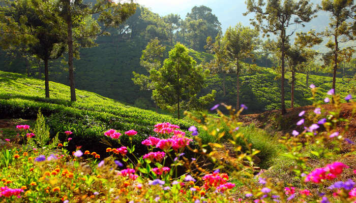 Best Things to do in Coonoor