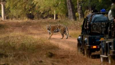 Best Tiger Safari in Ludhiana