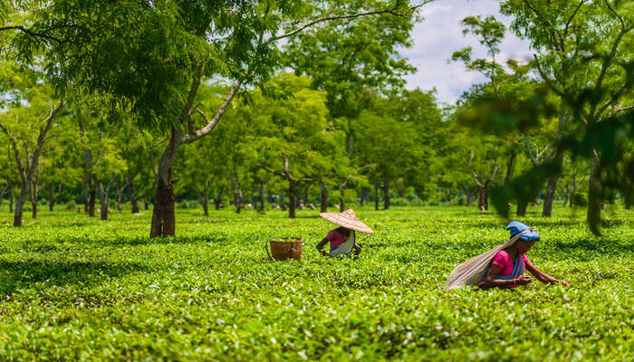 Best things to do in jorhat