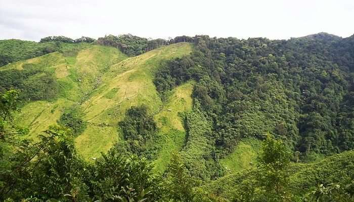 800px-Jhum_cultivation_in_Nokrek_Biosphere_Reserve_Meghalaya_India_Northeast_India_2004