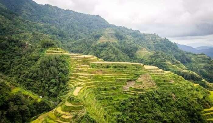 green terraces are a farming wonder