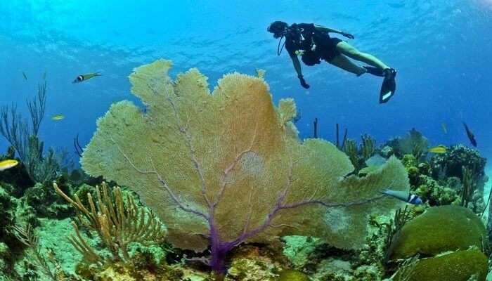 witness an underwater paradise