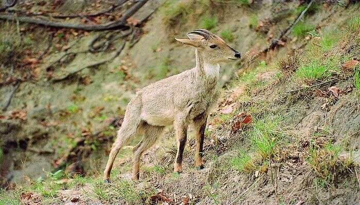 Rajaji Wildlife Sanctuary