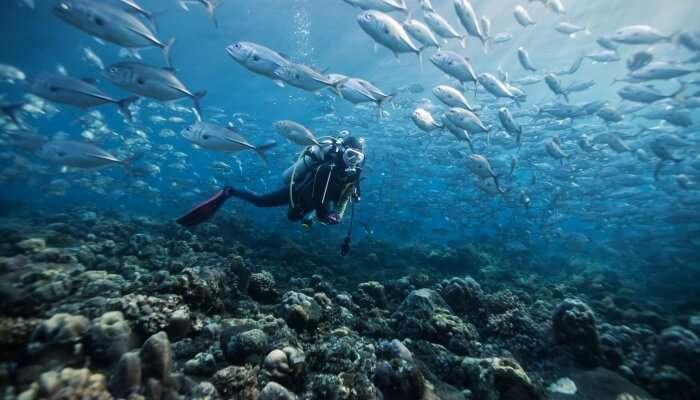 Scuba Diving In Chennai