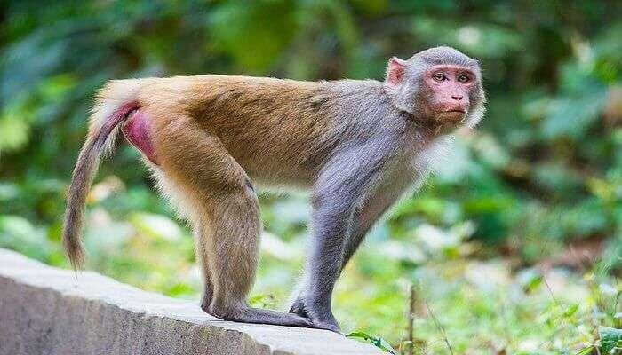 an old wildlife sanctuary located in Darjeeling