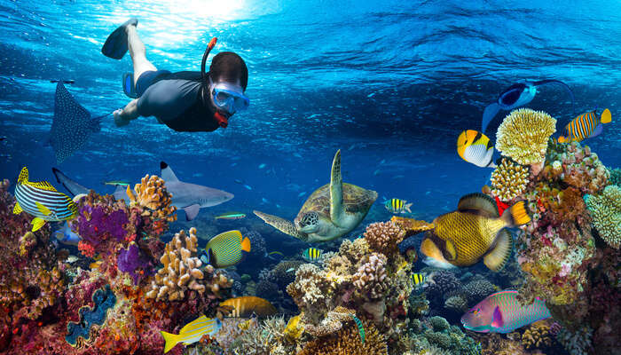 snorkeling picture