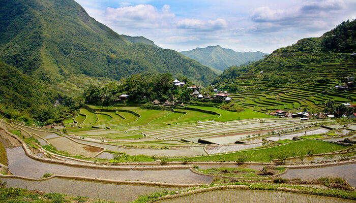 rice terraces in Ifugao