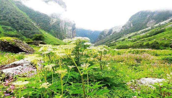 flower valley in uttrakhand