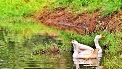 Wildlife Sanctuaries In Andhra Pradesh