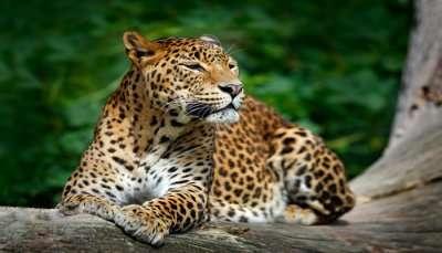 Wildlife Sanctuaries In Mizoram