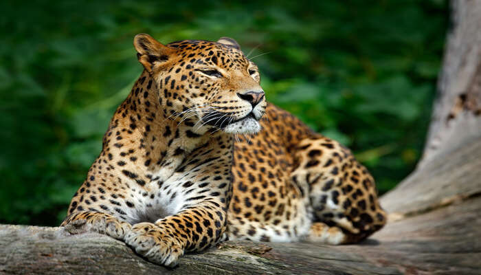 Wildlife Sanctuaries In Mizoram