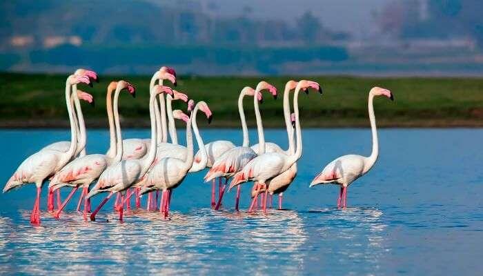 Wildlife Sanctuaries in Pune - Cover
