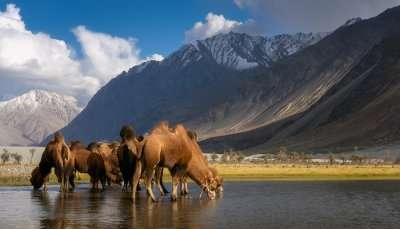 Wildlife sanctuaries in Kashmir - Cover