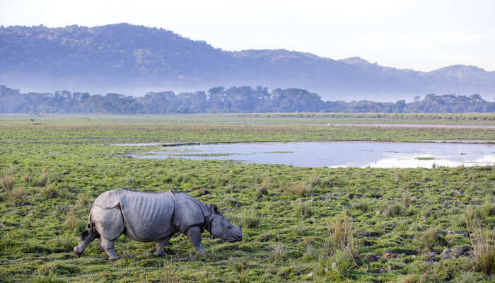 Wildlife Sanctuaries In Assam
