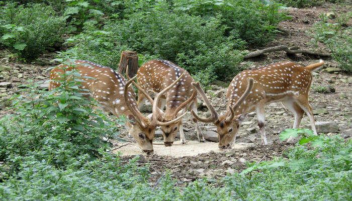 Wildlife Sanctuaries In Himachal Pradesh