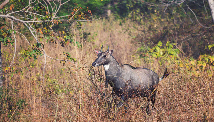 Wildlife Sanctuaries in Madhya Pradesh