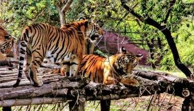 Zoos In Andhra Pradesh