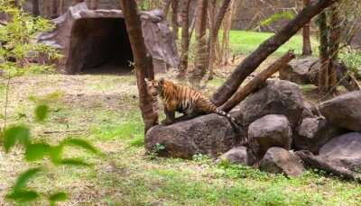 Zoos in Maharastra