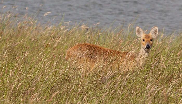 Bhainsrorgarh Wildlife Sanctuary