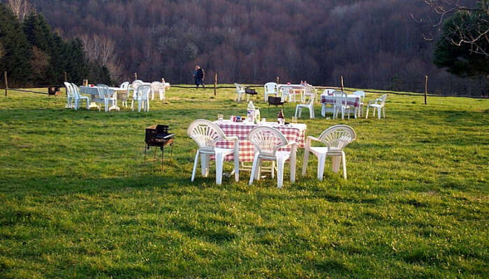 Tables and Chairs in a Green Space