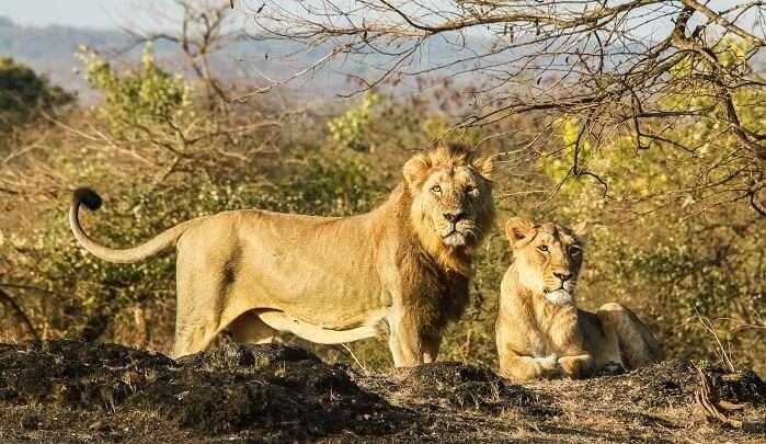 Upcoming Zoo In Gorakhpur