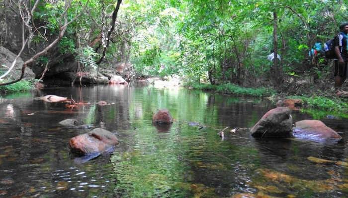 Serene Water Stream