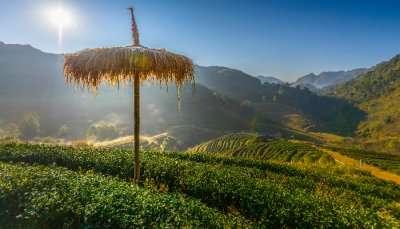 Doi Angkhang Mountains