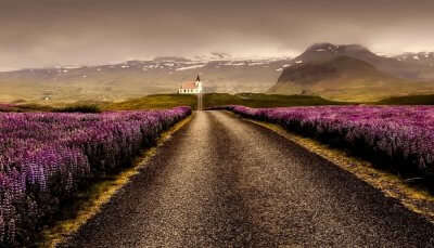 Blossoms in Iceland