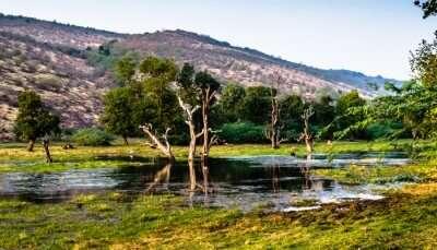Lake in Ranthambore