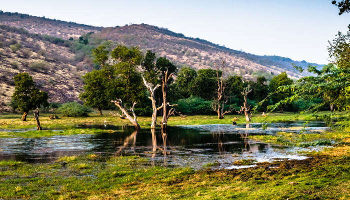 Lake in Ranthambore