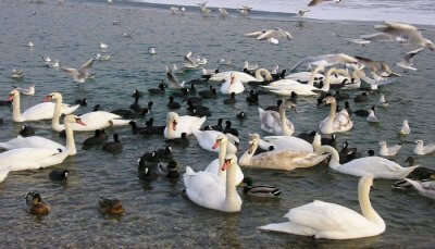 Migratory Birds Spotted In Odisha