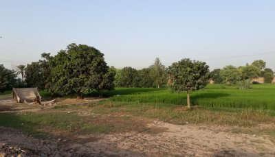 Things To Do In Punjab