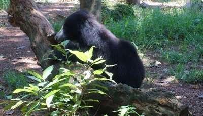 Dehiwala_zoo