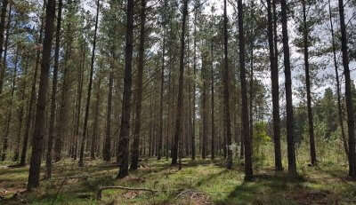 A sneak peek into the healing properties of forests